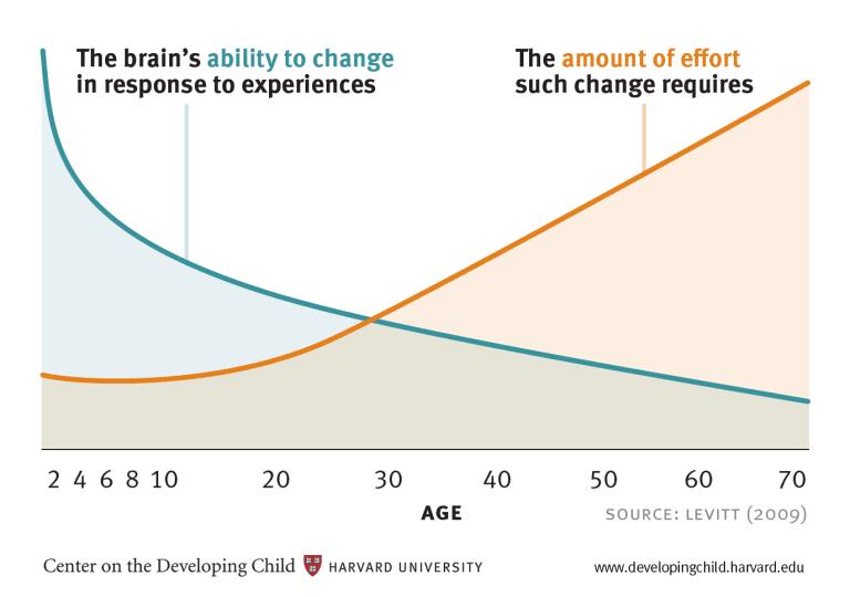 Brain development chart from Harvard